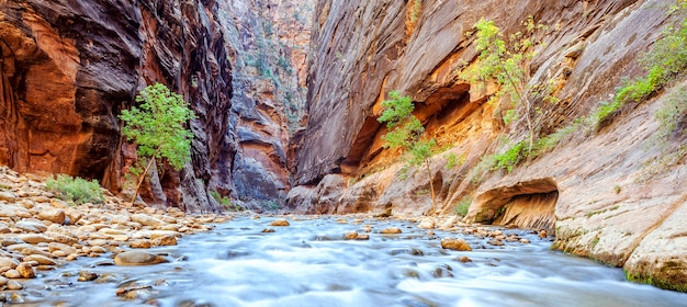 De iconische bocht van de virgin river in zion national park