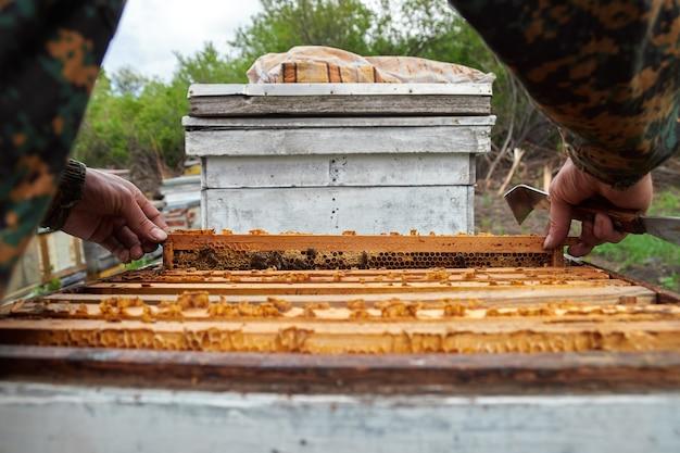De imker controleert de frames met honingraten in de kasten in de bijenstal