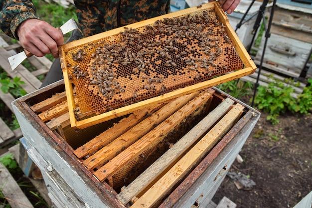 De imker controleert de frames met honingraten in de kasten