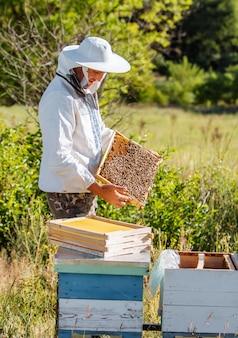 De imker heeft een honingcel met bijen in zijn handen. bijenteelt. bijenstal