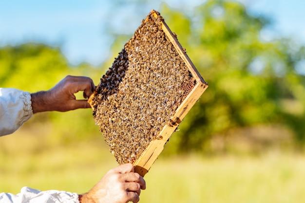De imker heeft een honingcel met bijen in zijn handen.