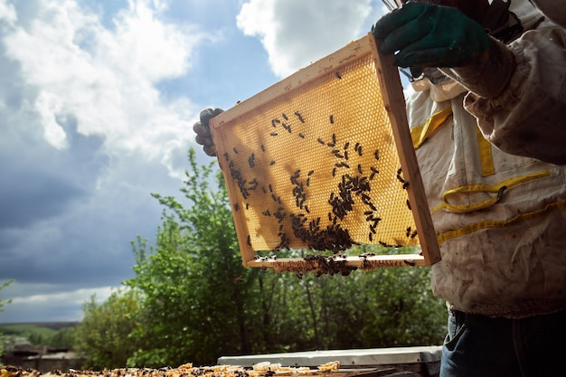De imker in de bijenstal controleert de bijenkorven en voert het schoonmaken uit, tilt de film op onder de dekking van de bijenkorf, horizontaal