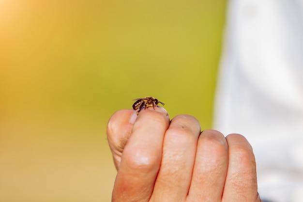 De imker onderzoekt bijen in honingraten. handen van de imker.