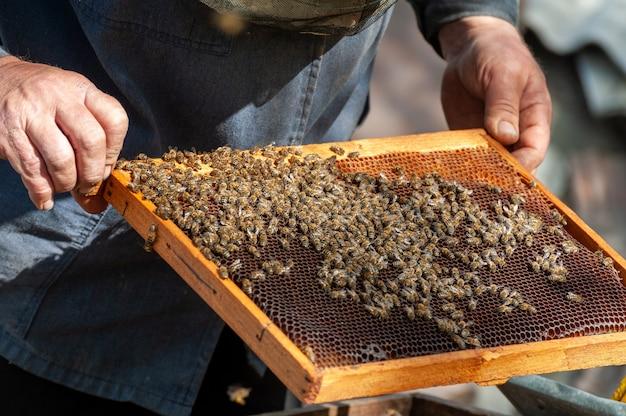 De imker onderzoekt bijen in honingraten. in de handen van een honingraat met honing.