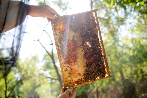 De imker opent de korf, de bijen controleren, controleren honing. imker die honingraat onderzoekt.