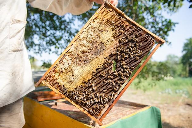 De imker opent de korf, de bijen controleren, controleren honing. imker honingraat verkennen.