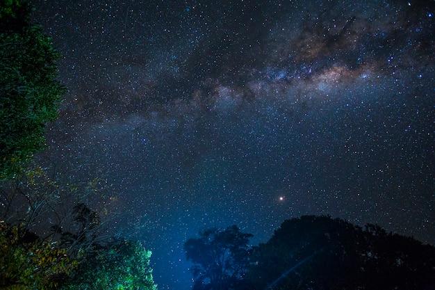 De indrukwekkende melkweg en enkele bomen in het masai mara nationaal park. kenia Premium Foto