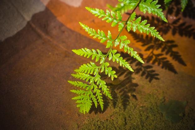 De installatiedecoratie van het schoonheids groene blad in de tuin met de achtergrond van het onduidelijk beeldwater