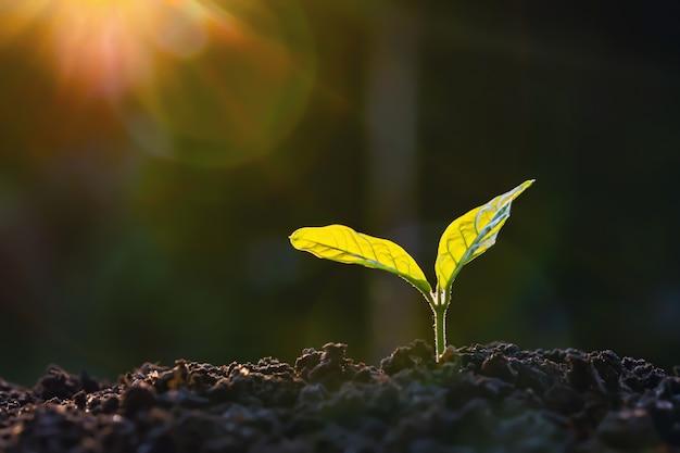 De installatiegroei in landbouwbedrijf met zonlichtachtergrond