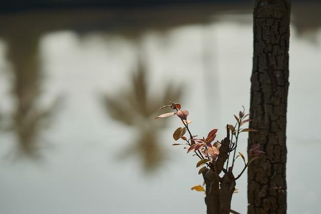 De jonge boom groeit op boomstomp die in nieuw kansconcept wordt gesneden
