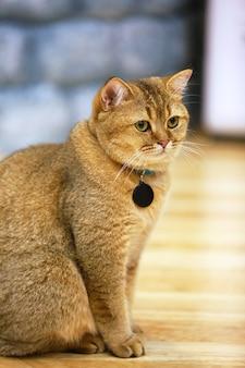 De jonge gekke verraste kat maakt grote ogenclose-up.
