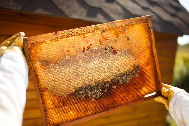 De jonge vrouwelijke imker houdt houten kader met honingraat.