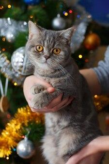 De jongen houdt een schattige kat in de buurt van de kerstboom