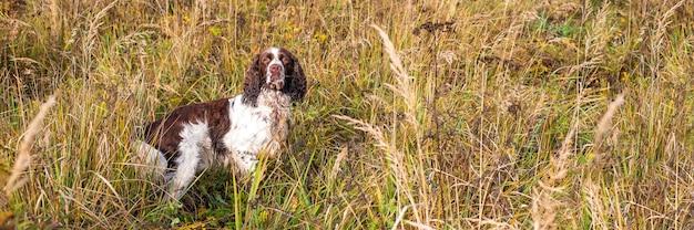 De kanonhond die zich op het droge grasgebied van de herfst bevindt.