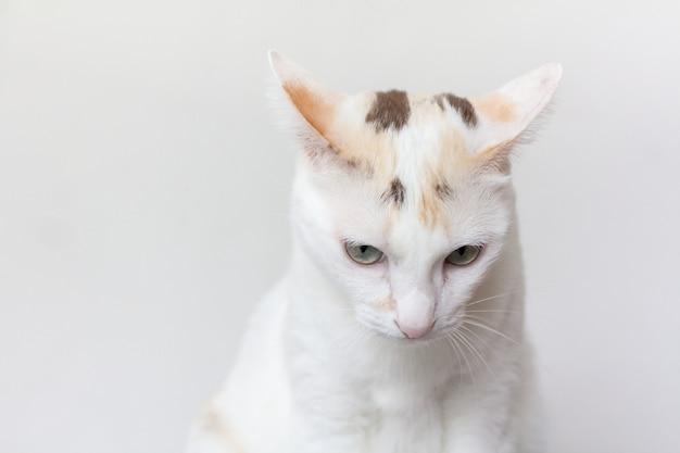 De kat begint me lastig te vallen. waarnemingen uit de oren duiden op een signaal dat niet bevalt