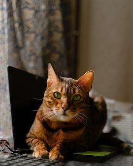 De kat die van bengalen op laptop computer ligt. werken vanuit huis met huisdieren concept