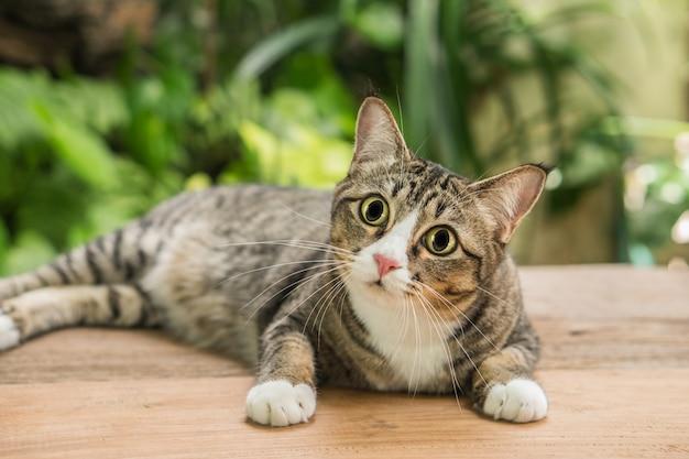 De kat in de tuin kijkt omhoog.