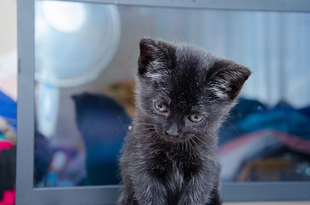 De kat is zwart maar de ogen zijn geel.