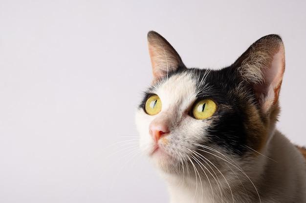De kat kijkt naar iets
