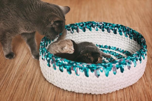 De kat kijkt naar vier pasgeboren pluizige kittens die in een heldere mand slapen