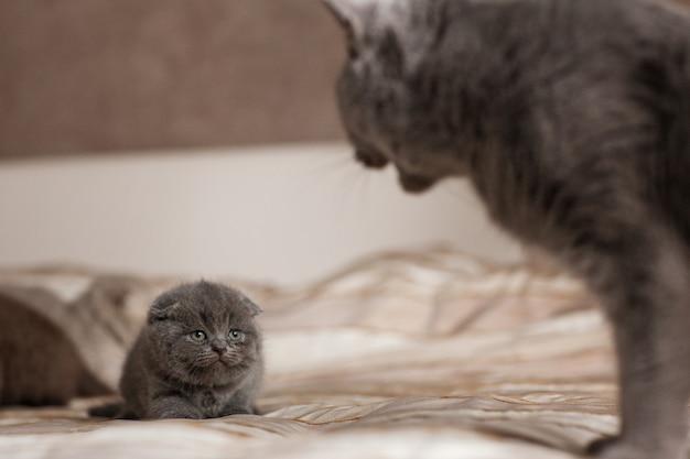 De kat kijkt naar zijn kitten.