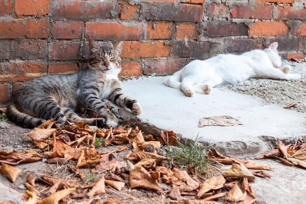 De kat lag op een betonnen ondergrond tussen herfstbladeren