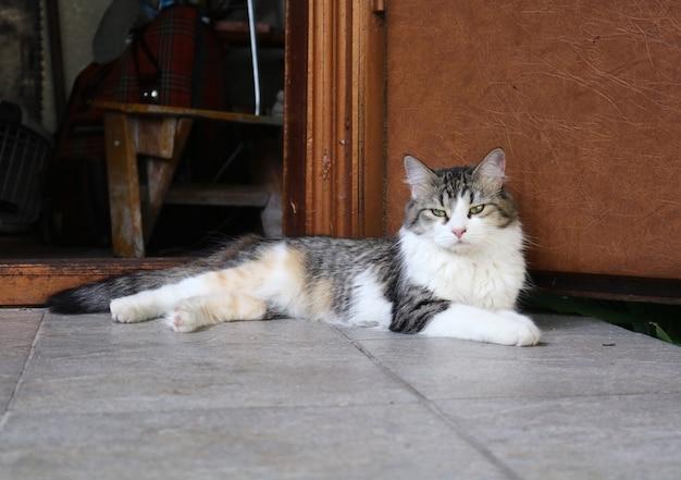 De kat ligt in de parochie van het huis of op de veranda bij het huis bij de deur