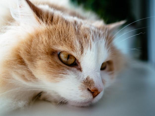 De kat ligt verdrietig op de vensterbank