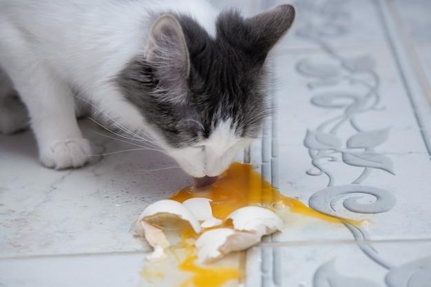 De kat likt een gevallen en gebroken kippenei van de vloer. de kat eet een natuurlijk rauw ei.