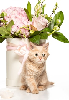 De kat met bloemen