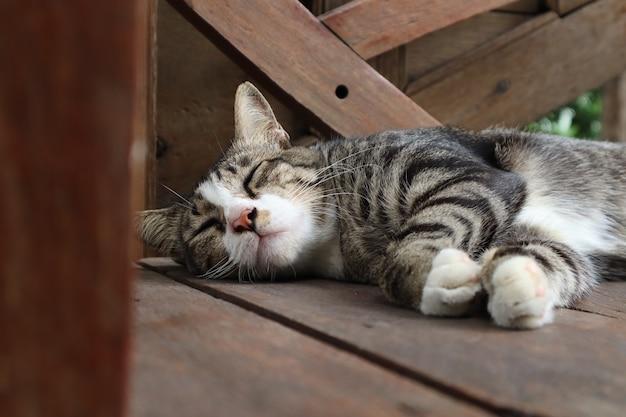 De kat met grijs haar ligt op een bruine houten stoel.