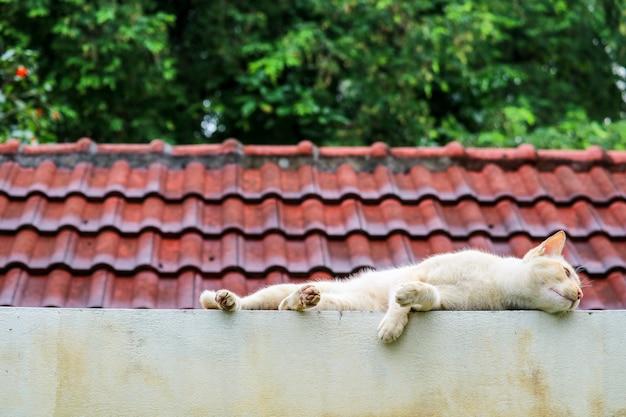 De kat ontspant op concrete muur ralaxing de achtergrond van de daktuin