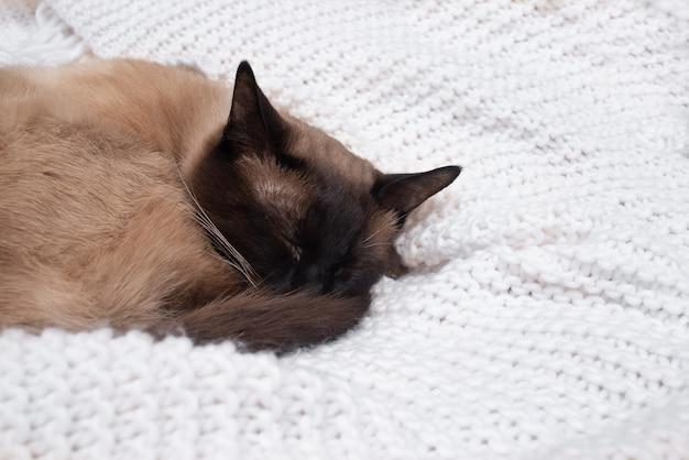 De kat slaapt op een witte gebreide sprei