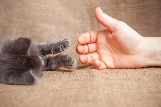 De kat strekt zijn poot uit naar een man vriendschap liefde huisdier kitten vertrouwt een man vriendschap
