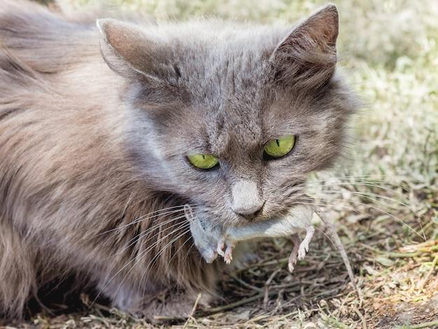 De kat ving een muis en hield haar in haar tanden
