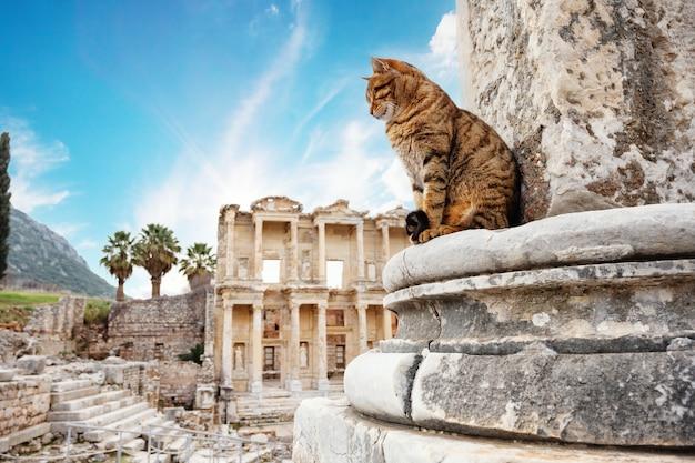 De kat voor de bibliotheek van celsus in efeze in de middag