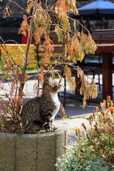De kat zit op een bloembed.