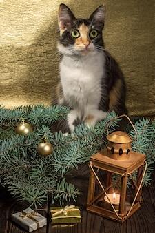 De kat zit op een houten tafel bij de kersttakken