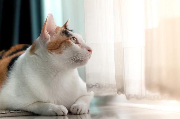 De katten calico kat liggend portret op het tapijt kijkt iets buiten de deur.