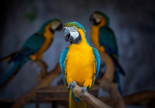 De kern van de papegaai op de takken in de dierentuin.