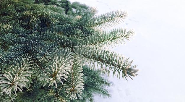 De kerstboom vertakt zich close-up met exemplaarruimte. vuren oogleden bedekt met rijm.