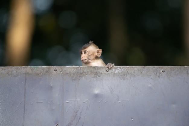 De kleine aapbaby speelt stout