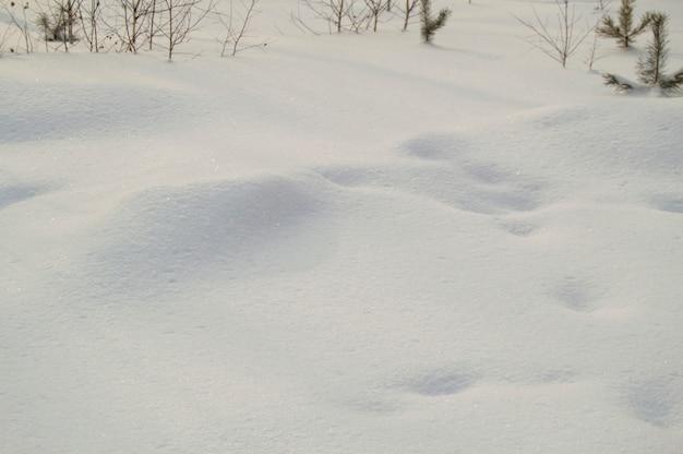 De kleine bomen die uit van onder de sneeuw plakken, kopiëren ruimte, natuurlijke achtergrond