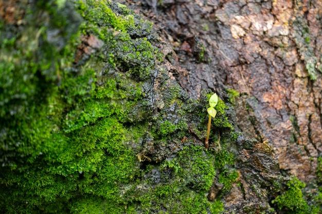 De kleine boom staat op de schors, omgeven door mosbomen.