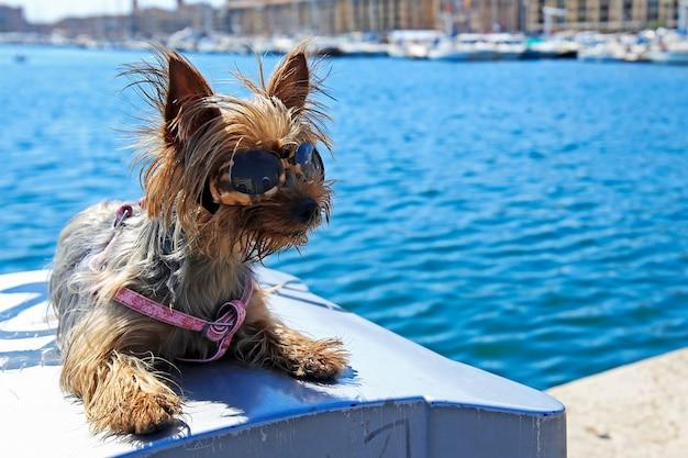 De kleine hond die zonnebril draagt zit dichtbij het overzees