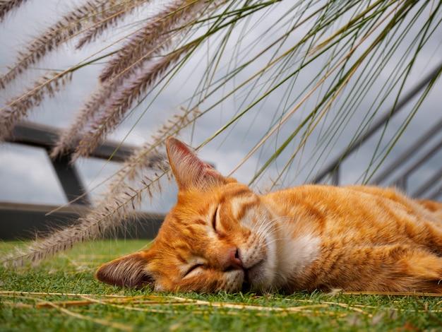 De kleine leuke slaap van de katjeskat buiten in het park met de achtergrond van het bloemgras