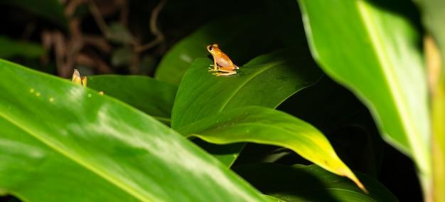 De kleine oranje kikker zit op een blad