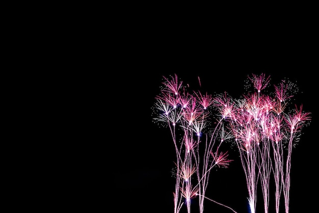 De kleur en schoonheid van vuurwerk ziet eruit als een grasbloem, 's nachts in de zwarte lucht, voor het vieren van het vakantiefestival, naar het happy new year-concept.