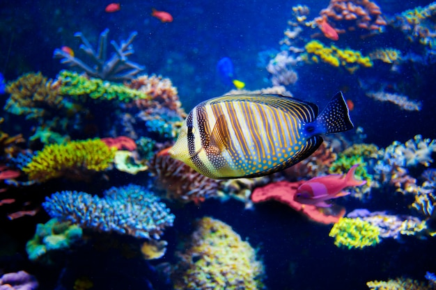 De kleurrijke aquariumvissen sluiten omhoog