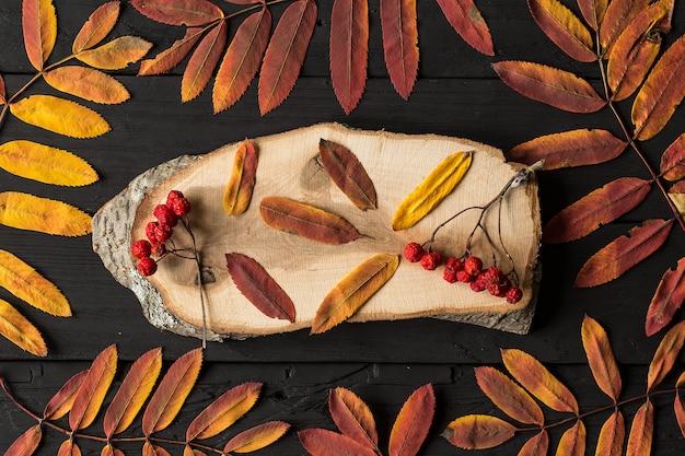 De kleurrijke bladeren van de dalingsesdoorn op zwarte houten